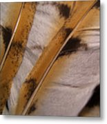 Owl Feathers Photograph Metal Print
