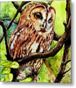 Owl From Butterfingers And Secrets Metal Print by Morgan Fitzsimons