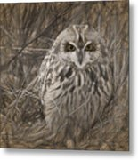 Owl In The Woods Metal Print