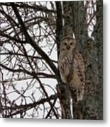 Owl In Winter Metal Print