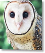 Owl Insight Metal Print