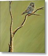 Owl On A Branch Metal Print