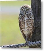 Owl On A Rope Metal Print