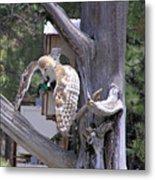Owl Takeoff Metal Print