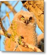Owlet In A Spring Sunrise Metal Print