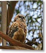 Owlet Lookout Metal Print