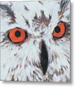 Owlish Eyes Metal Print