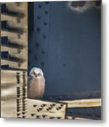 Owls And Trestles Metal Print