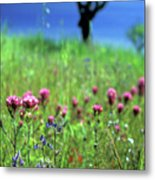 Owl's Clover And The Tree Metal Print