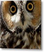 Owl's Eyes Metal Print