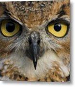 Owls Eyes Metal Print