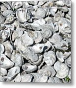 Oyster Shells On Cumberland Island Metal Print