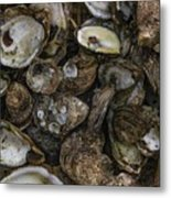 Oysters Two Metal Print