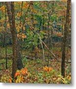 Ozark Forest In Fall 2 Metal Print