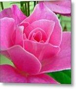 p1050202b  Pink Rose Metal Print