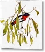 pa TonyOliver AustralianBirds 13 MistletoeBird Tony Oliver Metal Print