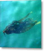 Pacific Kelp Metal Print