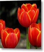 Pacific Northwest Tulips 5 Metal Print