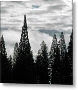 Pacific Pines Metal Print