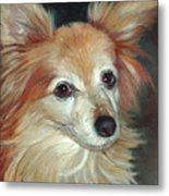 Paco The Papillion Metal Print