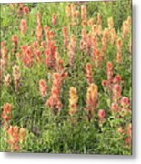 Paintbrush Beauties Metal Print