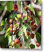 Painted Berries Metal Print