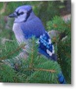 Painted Blue Jay  Metal Print