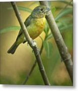 Painted Bunting Female Metal Print
