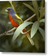 Painted Bunting Male Metal Print
