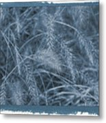 Painted Cyanotype Golden Wheat Metal Print