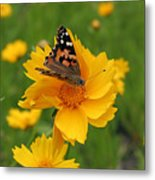 Painted Lady Butterfly Metal Print