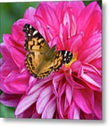 Painted Lady On Dahlia Metal Print