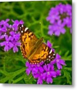 Painted Lady On Purple Verbena Metal Print