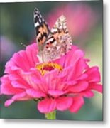 Painted Lady On Red Zinnia 3  Metal Print