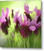 Painted Lavender By Kaye Menner Metal Print