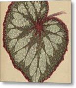 Painted Leaf Begonia Metal Print