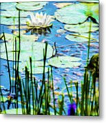 Painted North American White Water Lily Metal Print