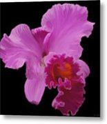 Painted Orchid Metal Print