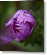 Painted Purple Aster Metal Print