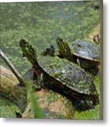 Painted Turtles Metal Print