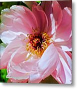 Painted Velvet Petals Metal Print