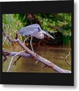 Painting Blue Heron Oak Creek Metal Print