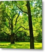Painting-like Photo Of A Rural Lawn Metal Print