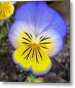 Painting Of Pansey Flower Metal Print