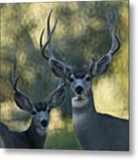 Pair Of Bucks Metal Print