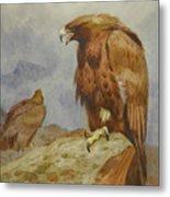Pair Of Golden Eagles By Thorburn Metal Print