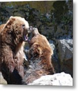 Pair Of Grizzly Bears Biting At Each Other Metal Print