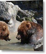 Pair Of Grizzly Bears Wading In A Shallow River Metal Print