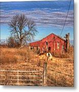 Pair Of Horses Grazing In A Field Metal Print