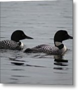 Pair Of Loons Metal Print